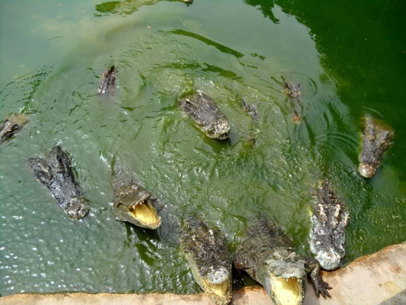 сад камней и крокодилова ферма