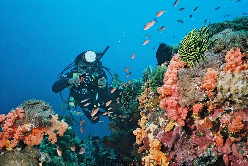 Андаманское море дайвинг