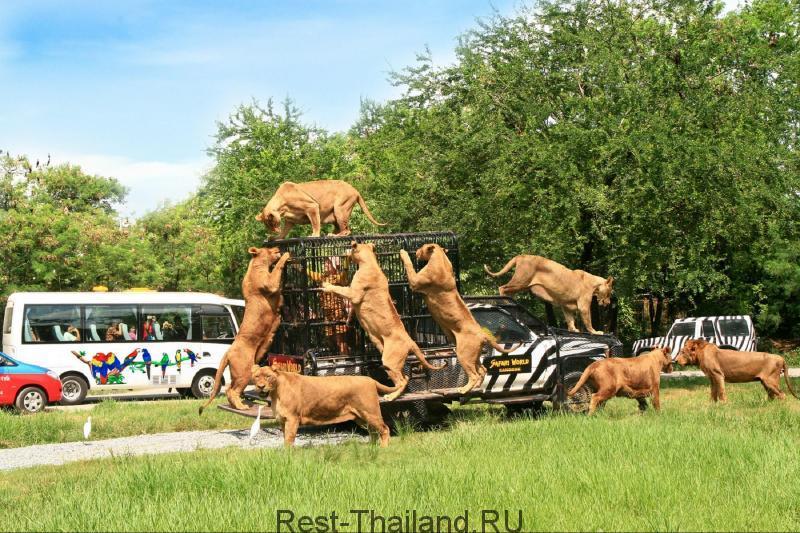 Сафари парк в Бангкоке