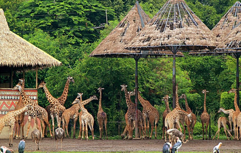 Уникальный парк животных в Бангкоке