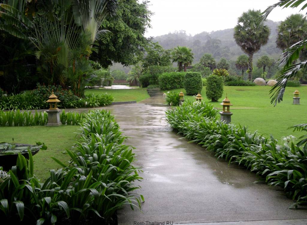 дожди в Пхукете