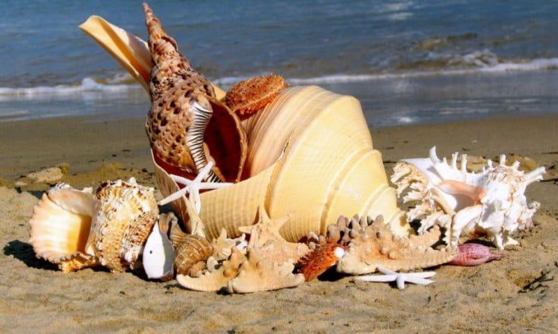 Можно ли вывозить из Тайланда ракушки и кораллы