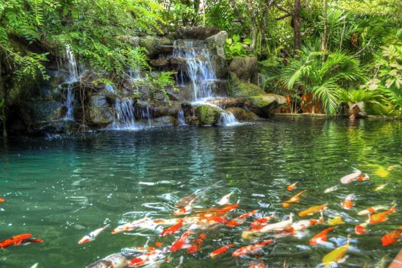 Водопад и золотые рыбки в ботаническом саду на Пхукете