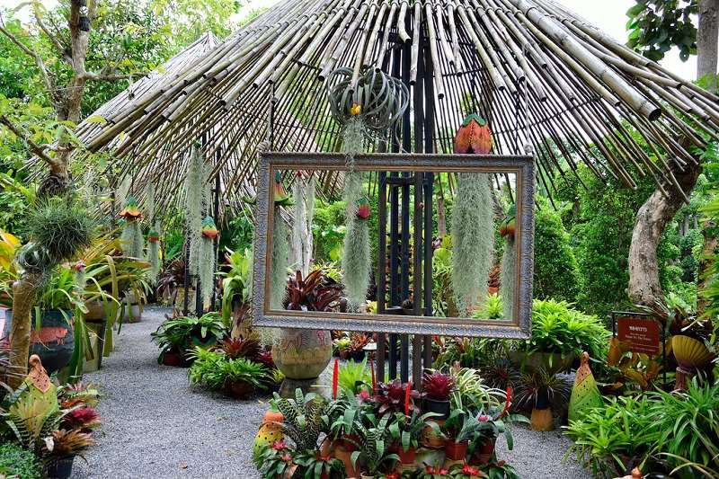 растения в ботаническом саду Пхукет