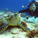 дайвинг с черепахой Симиланские острова